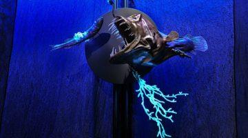 Creatures of Light Exhibit at the Michigan Science Center